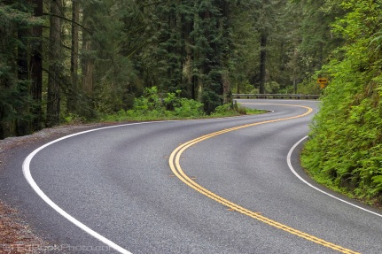 Redwood Highway, northern California, S-curve